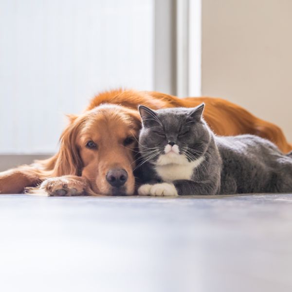 Spay and Neuter Subscription